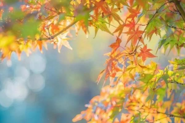 秋意渐浓,可以让家中更具空灵通透感